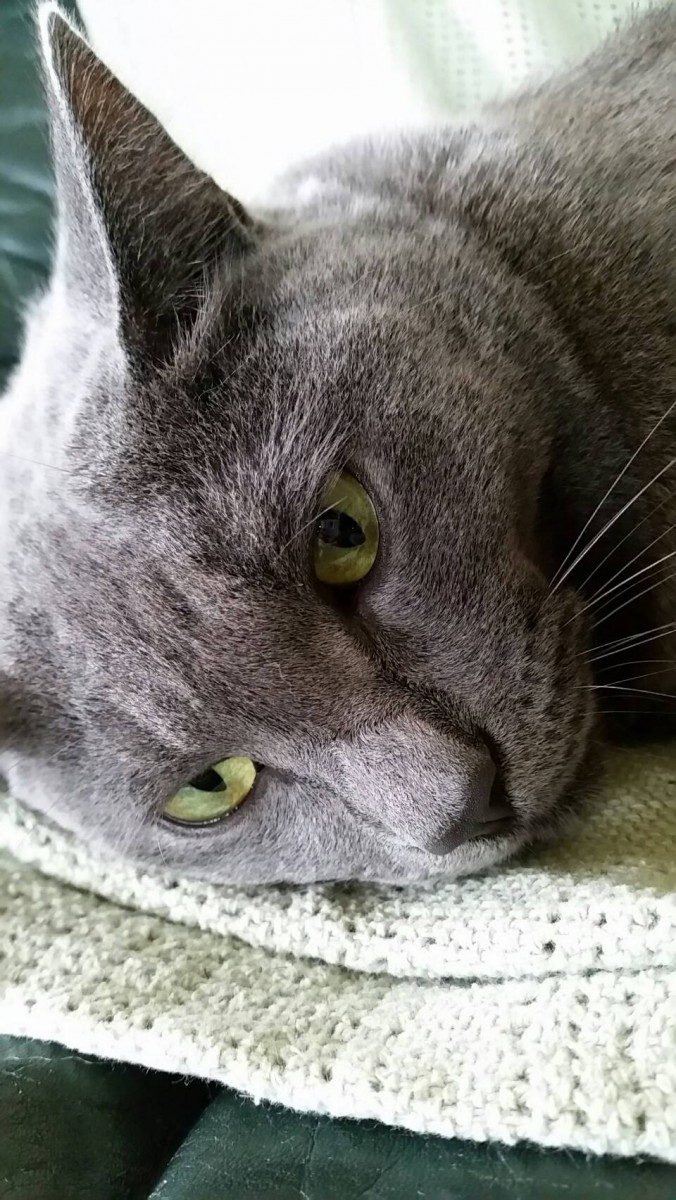 半ノラ猫だったセナ