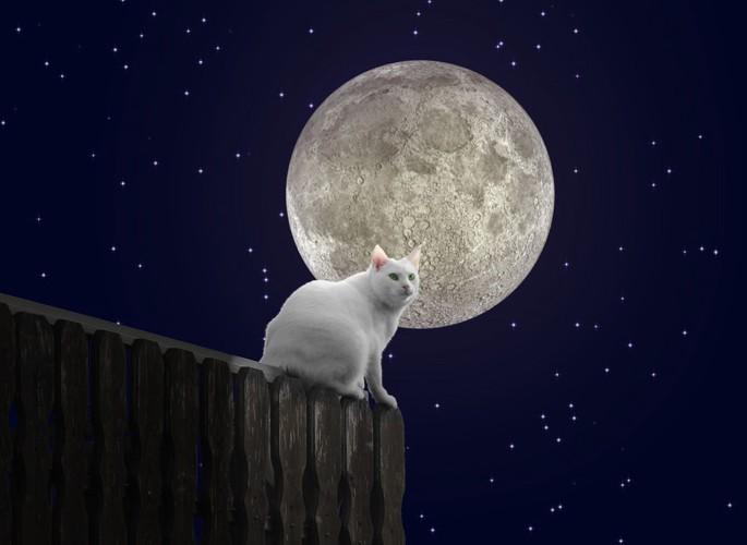 満月と白猫