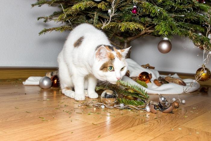 クリスマスツリーを壊した猫