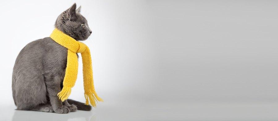 黄色いマフラーをした猫