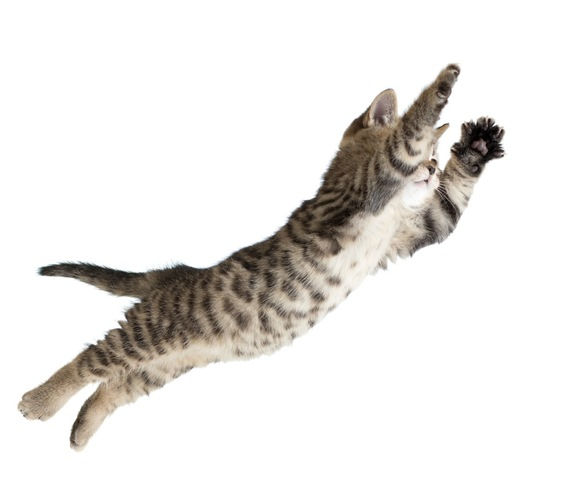 猫のジャンプ力に関するまとめ