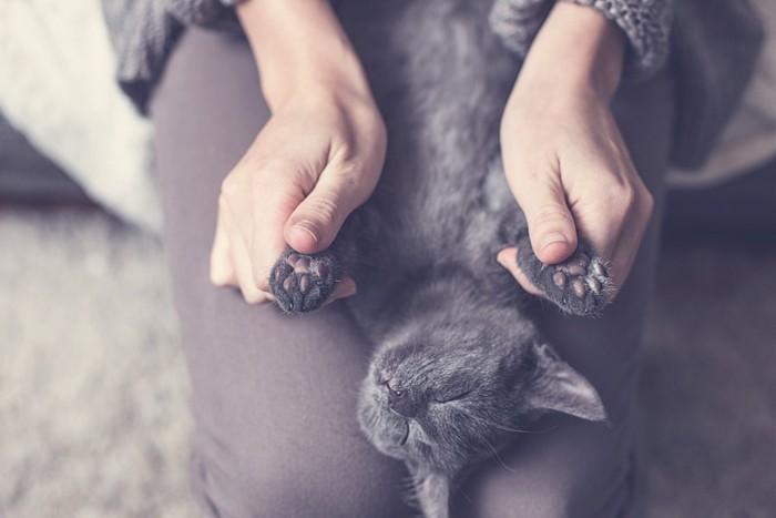 肉球をマッサージされている猫