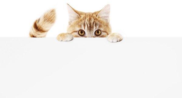 様子を見る猫