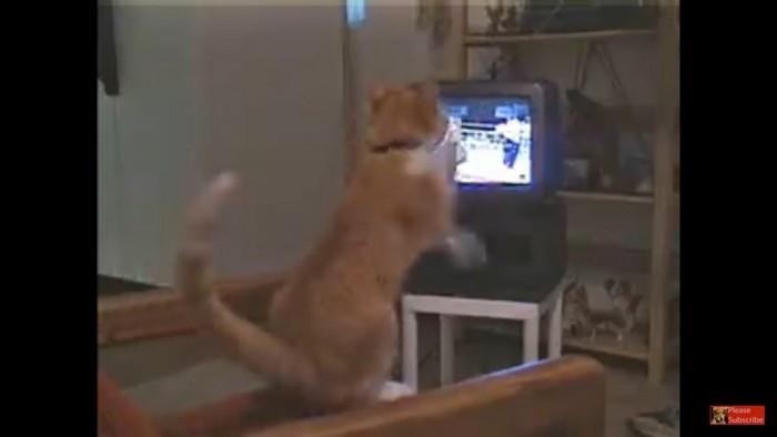 立ち上がり猫パンチ