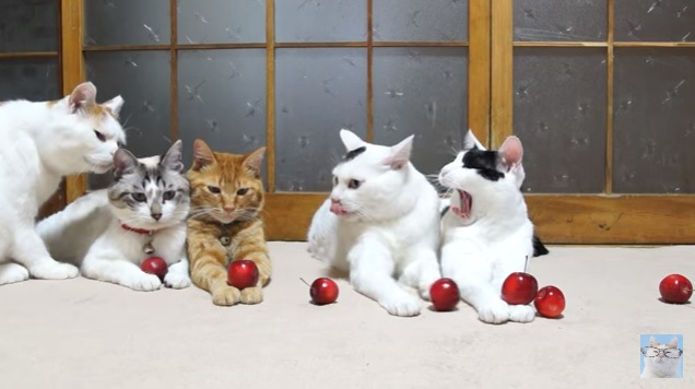 あくびをする右端の猫
