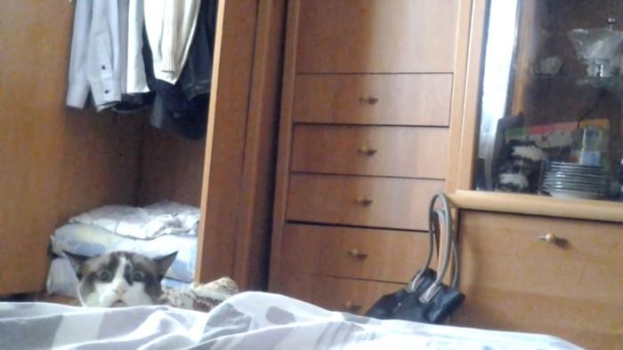 また戻ってくる猫