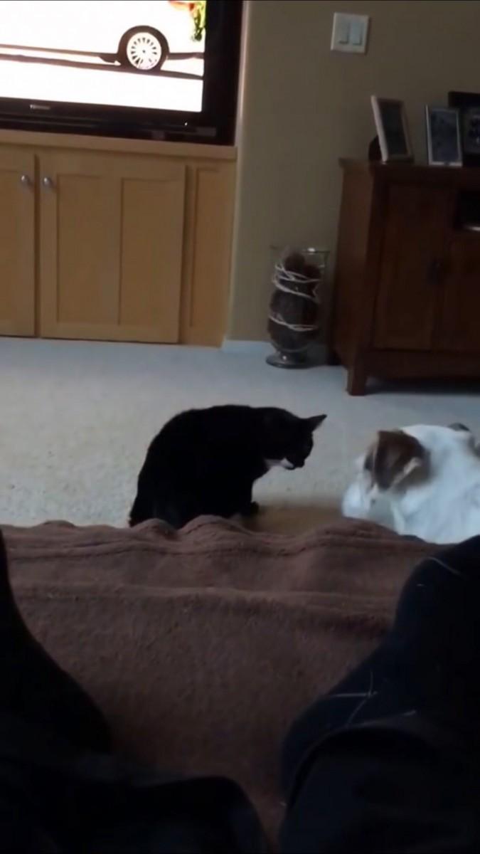 猫の顔色を窺う犬