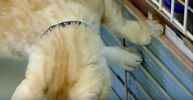棚のネットの中へ足を伸ばそうとする猫