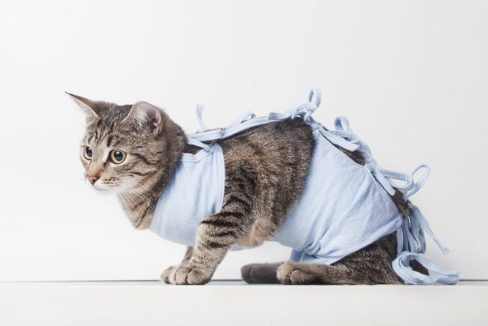 手術後の洋服を着る猫