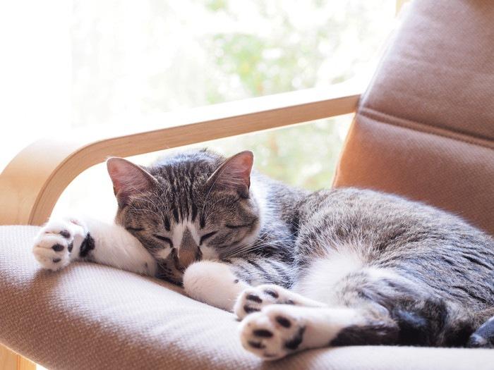 椅子で眠る猫の写真