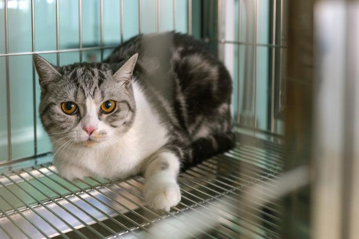 ケージの中にいる猫の写真
