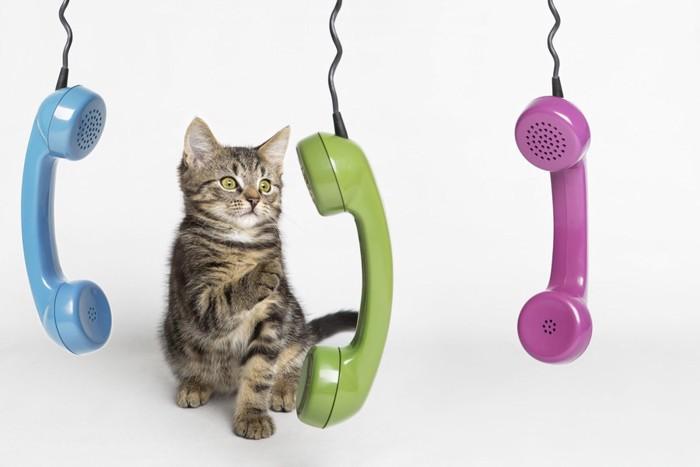 子猫と電話