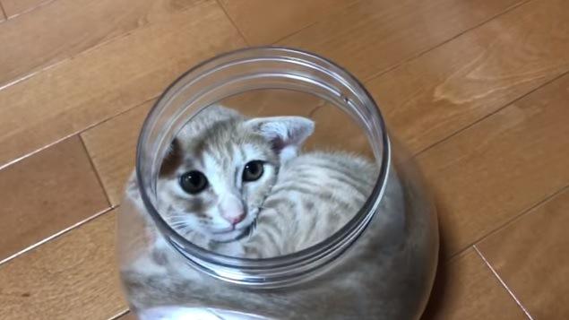 猫の入った瓶(上から撮影)