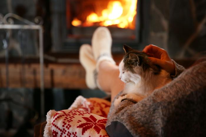 暖炉の前で撫でられる猫