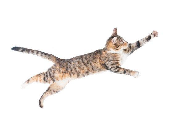 元気に走る猫