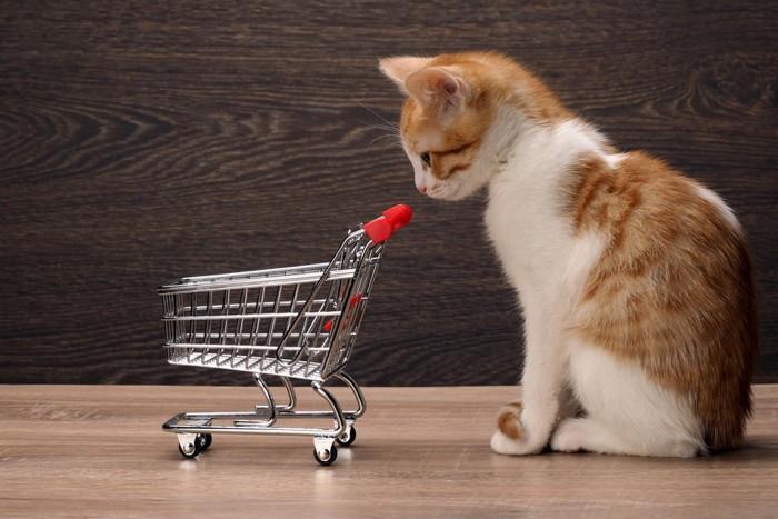 カートをみつめる猫