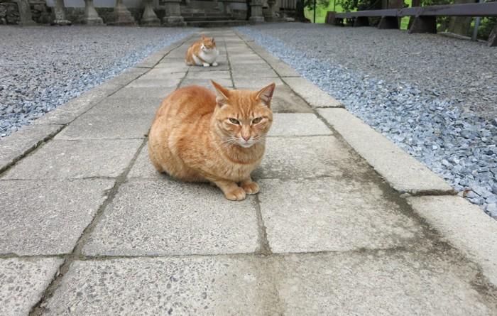 石畳に座っている茶トラ