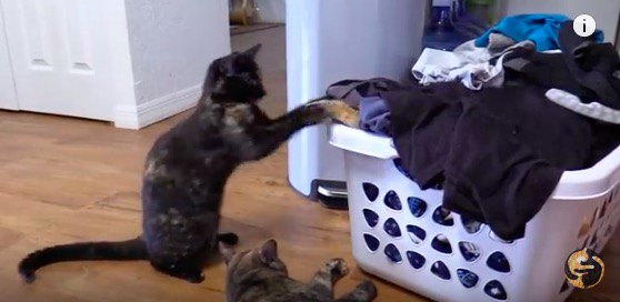 猫同士で遊ぶ