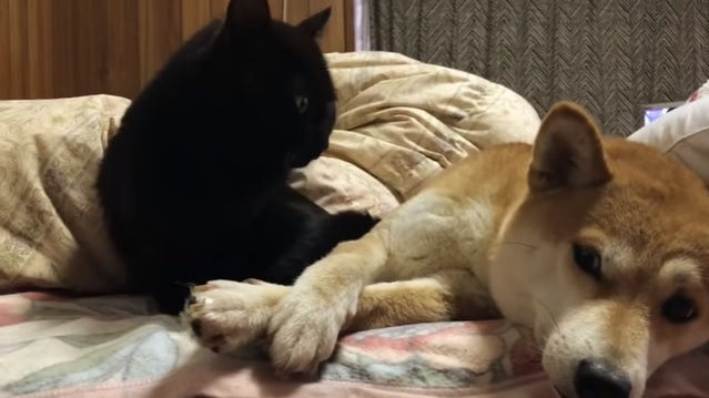 犬を見つめる猫