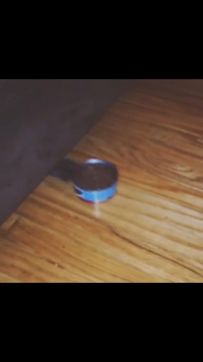 缶詰めを掴む猫
