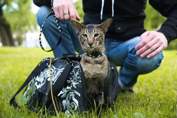 リードハーネスにつながれた猫