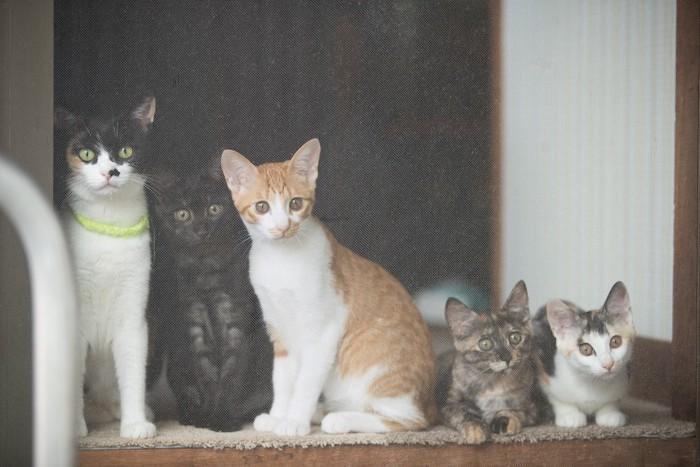 外を見ている一緒に暮らす五匹の猫