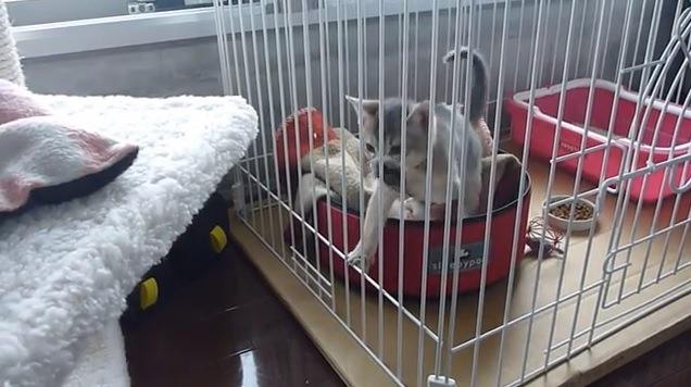柵を引っ掻く猫