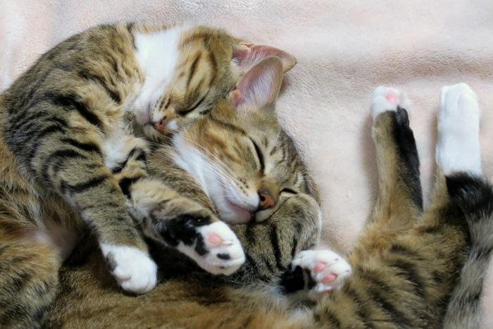 重なり合って寝る猫