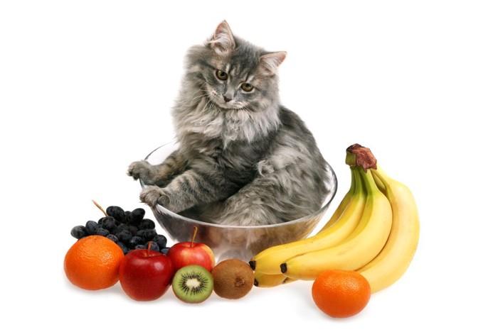 猫とフルーツ