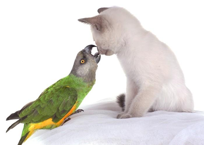 子猫と大きいインコ