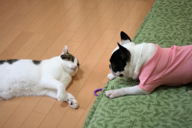犬と成猫いっしょ