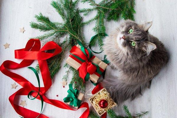 2つのプレゼント箱と猫