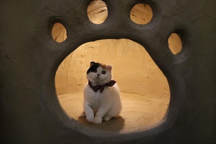 足跡型の穴の中