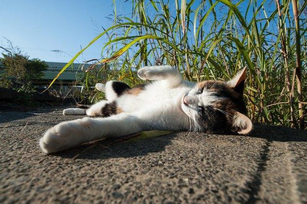 イメージ通りに寝そべっている猫