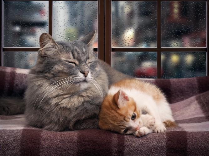 寝てる二匹の猫