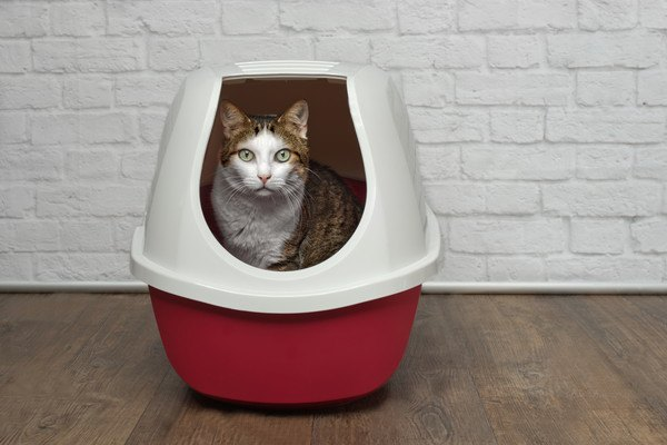 トイレから覗く猫の写真