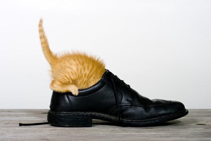 靴に隠れる子猫