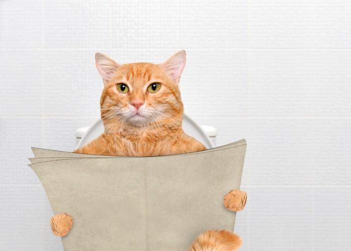 本を持ってトイレに入る猫