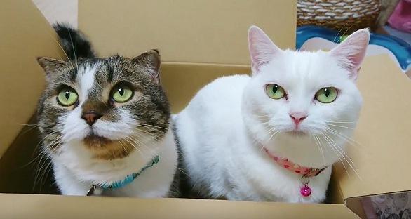 こちらを見上げる猫達