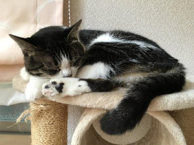 休息する猫