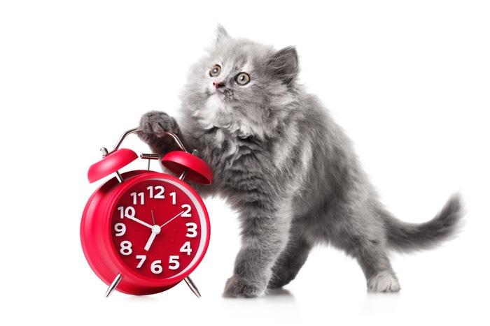 赤い時計と長毛の子猫