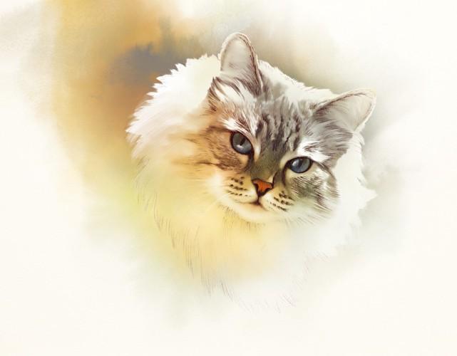 淡い色の猫のイラスト