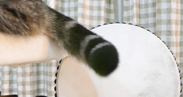 太鼓の前に猫の尻尾
