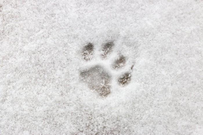 雪の上の猫の足跡