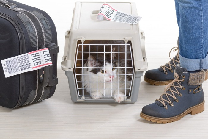 人の足下でキャリーバッグに入っている猫