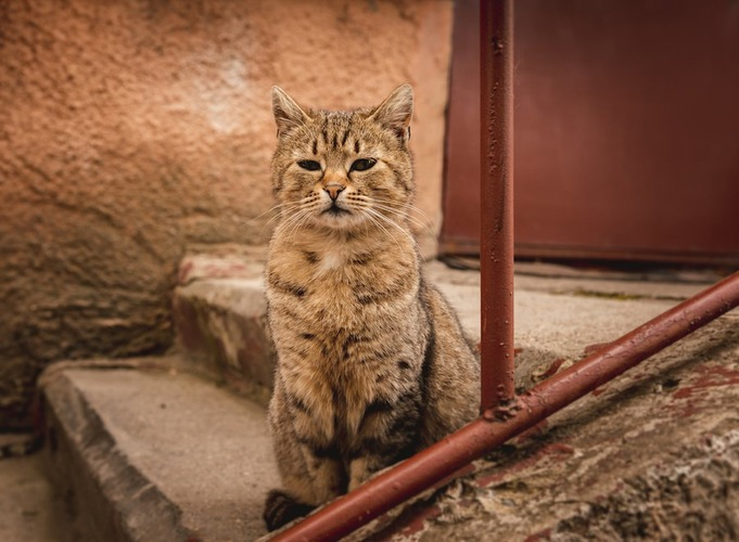 階段の途中で座る猫