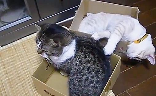 箱でくつろぐ猫たち