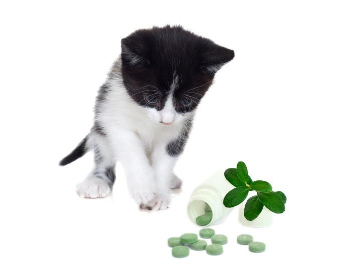 猫とサプリメントの写真