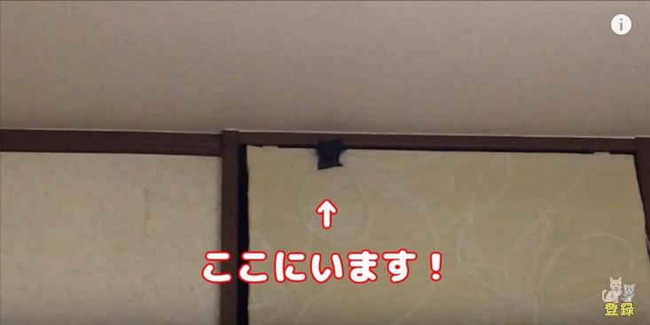 壁に張り付く猫