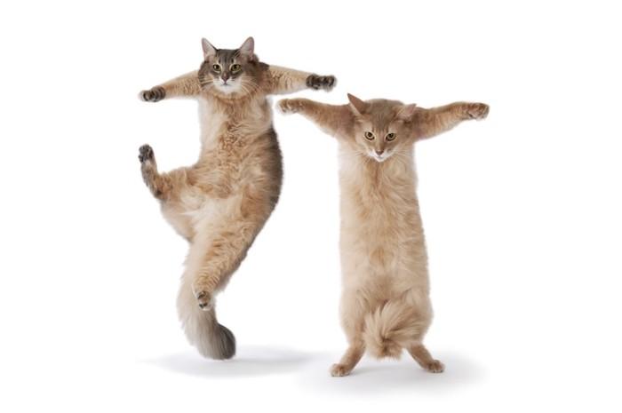 立ち上がってダンスをする二匹の猫